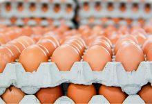 ホアファットとの会社は北部中で最も卵を売っている