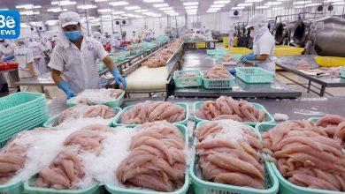 マレーシアに輸出されるバサ魚の量が急増になりました