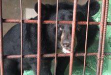 140 kgの熊馬を救う3