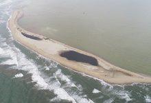Cua Dai海での砂丘の面積は1.5ヘクタール減少なりました
